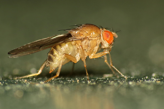 Close up on a fruit fly landing on the lid of a compost bin.